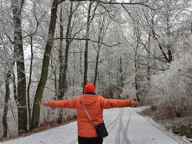 Sele en el bosque escarchado de Coburg (Norte de Baviera, Alemania)