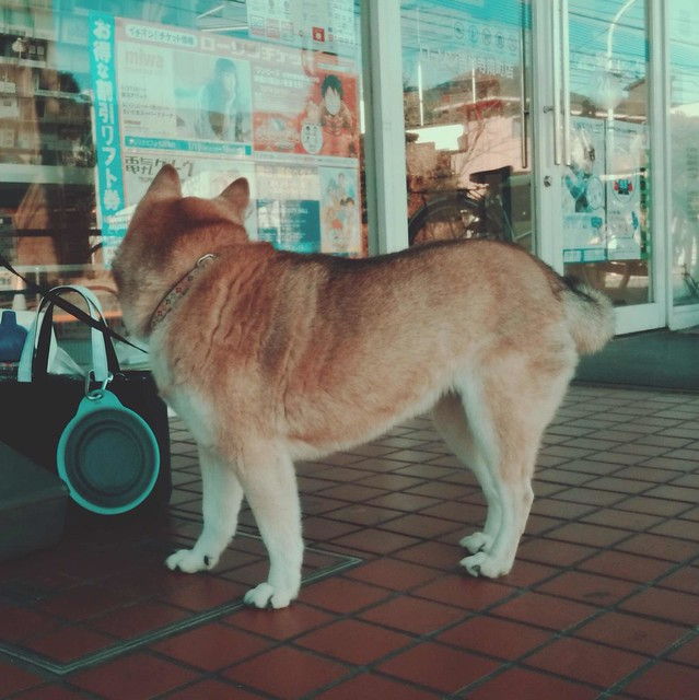 Dog looking into shop window
