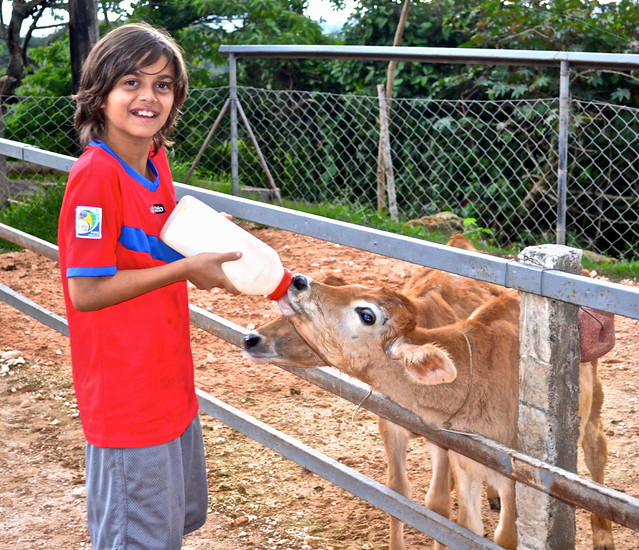 baby calfs - dairy farm tour - La Ruta del Yalu