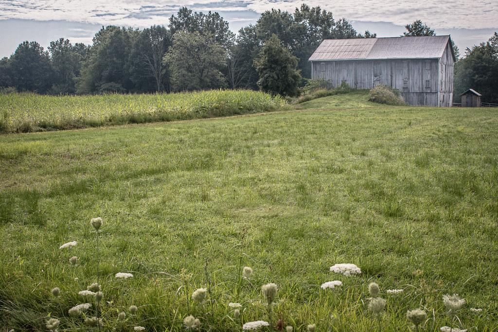 Summer On The Farm Marlboro Stark County Ohio Denise