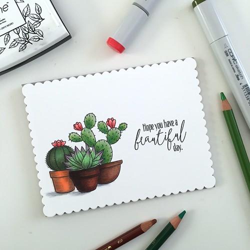 MFT sweet succulents card set