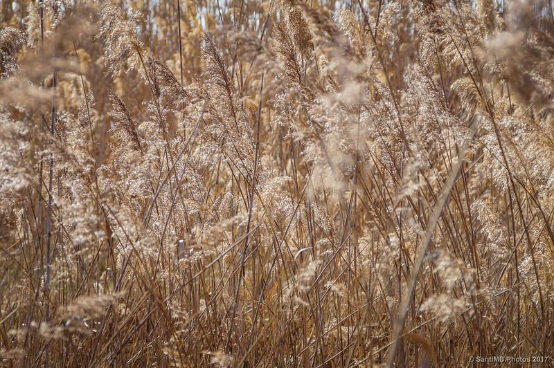 Efectos de la sequía en la vegetación de la marisma