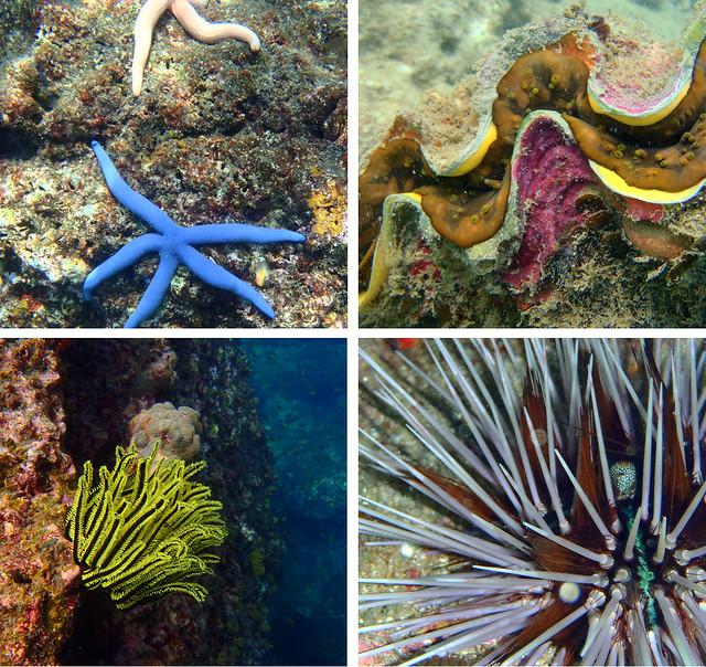 Peces del fondo del mar de Andamán