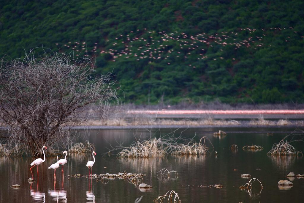 柏哥利亞湖(Lake Bogoria)。鍾昆典攝 。