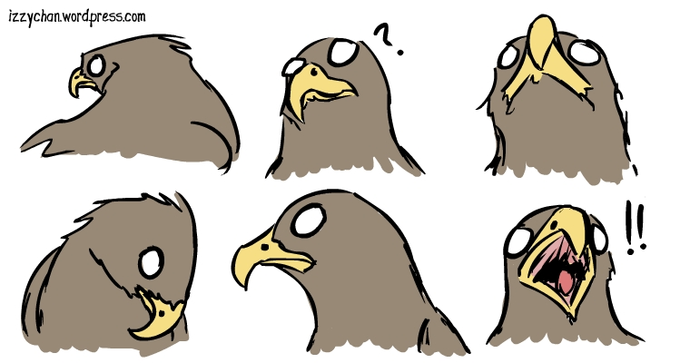 bird of prey faces hawk derp