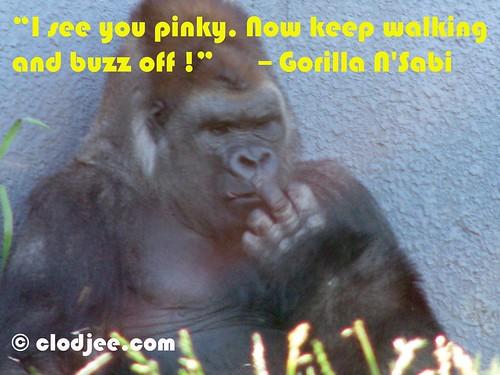 Gorilla N'Sabi