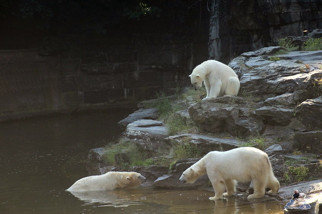 Tierpark Berlin 13.06.2015   4