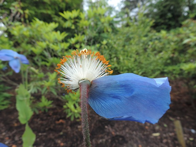 one petal left