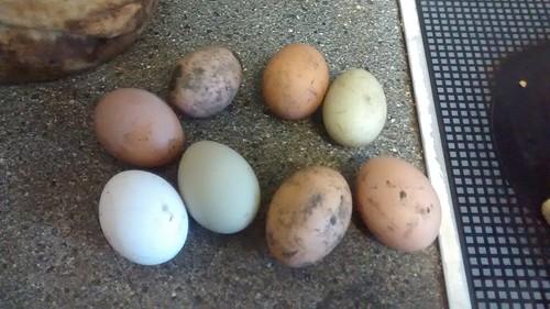 eggs Jan 17 2