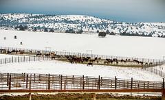 Wild Horse Corral Facility - Hines, Oregon