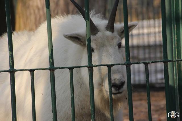 Tierpark Friedrichsfelde 22.01.201762