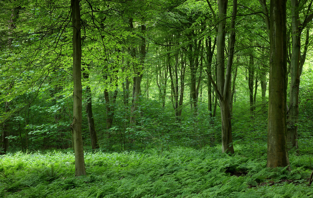 Friston Forest in June