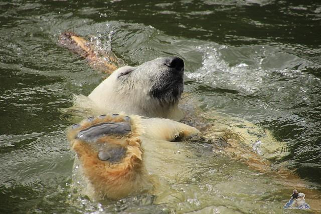 Tierpark Berlin 30.05.2015  91