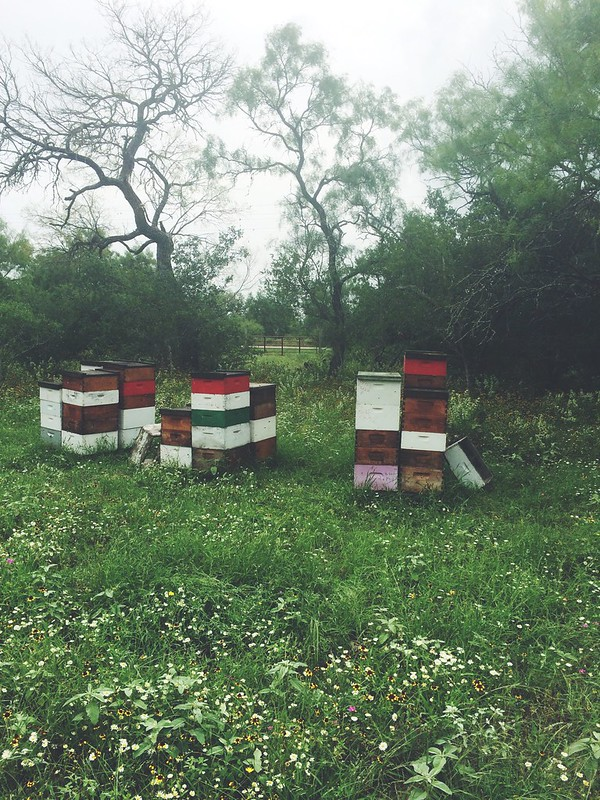 Bigfoot bee yard June 2015
