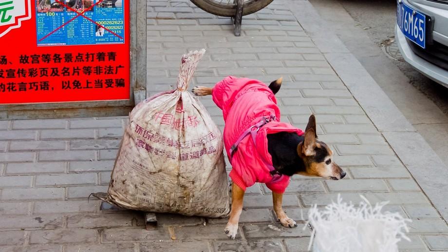 Beijing Dec 2014 - 0241