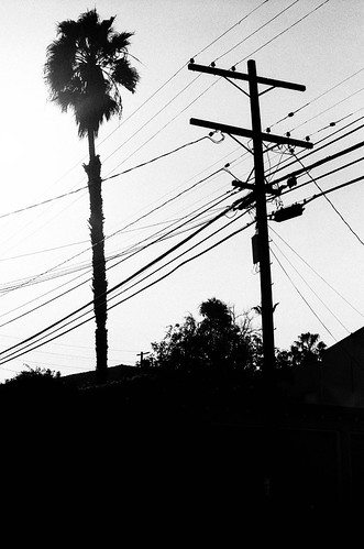 Tree & Telephone Pole, West LA | by Jesse Keller