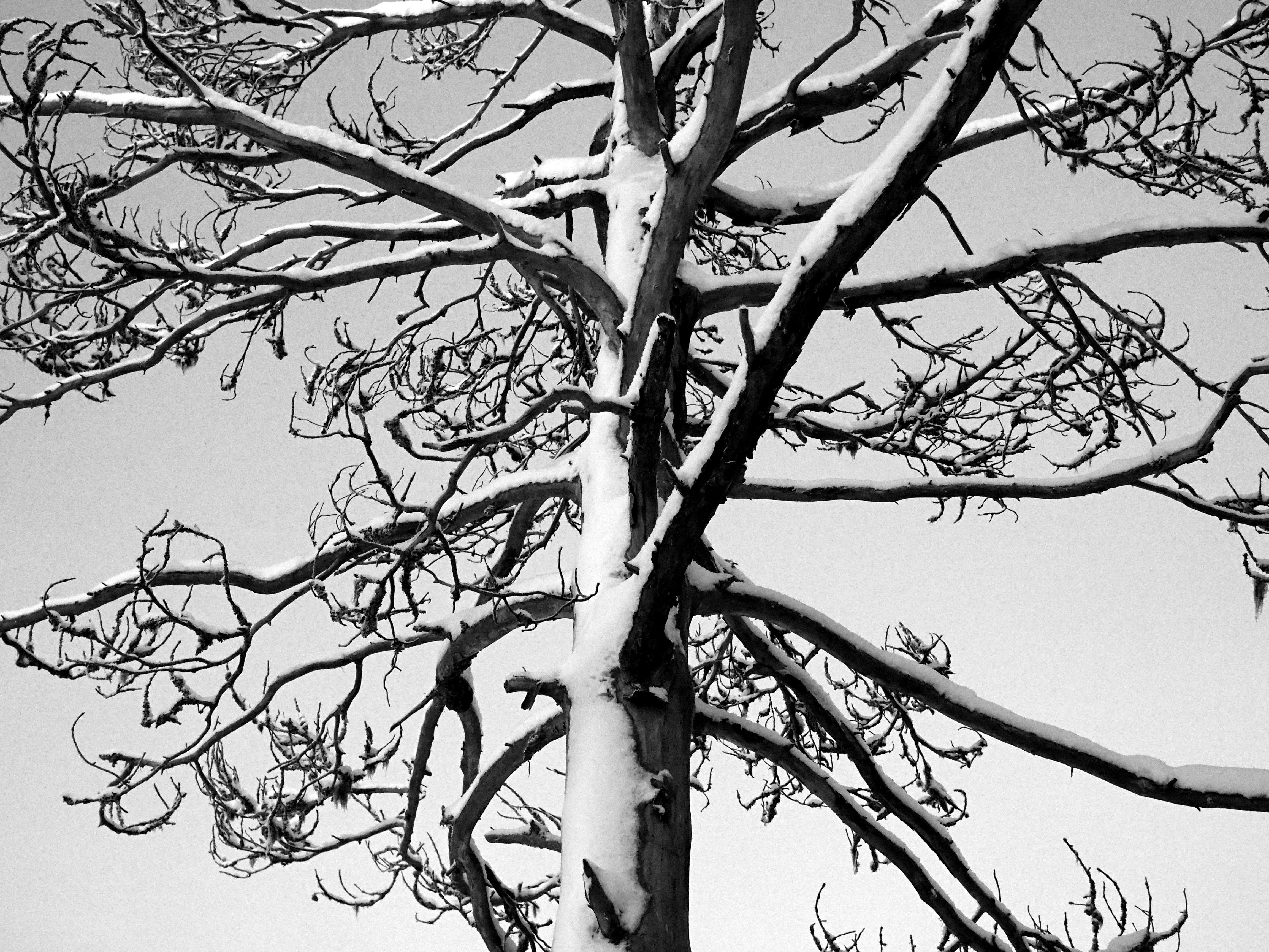 hiljaisuus puu mustavalko