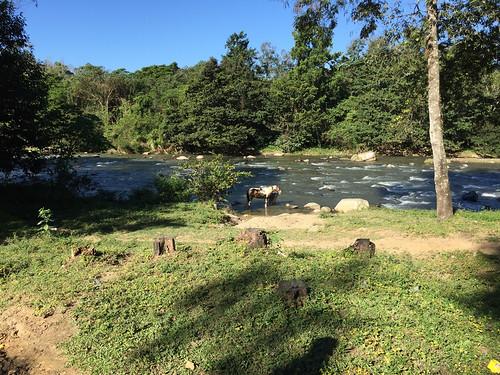 46 - River & horse