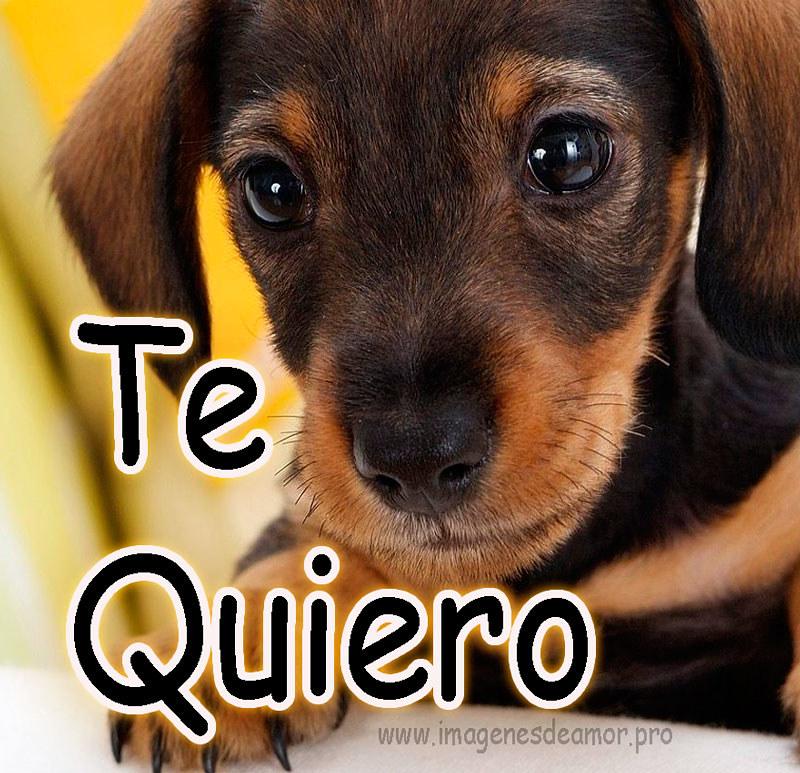 10 Imagenes De Perritos Con Frases Cortas Originales Para Flickr