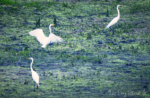 3 Egrets in Eagan, MN
