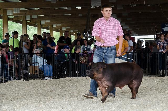 Ben #pig #hog #swine