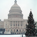 2002 U.S. Capitol Christmas Tree