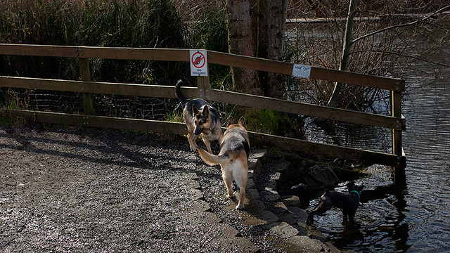 Dog Park Redmond Wa