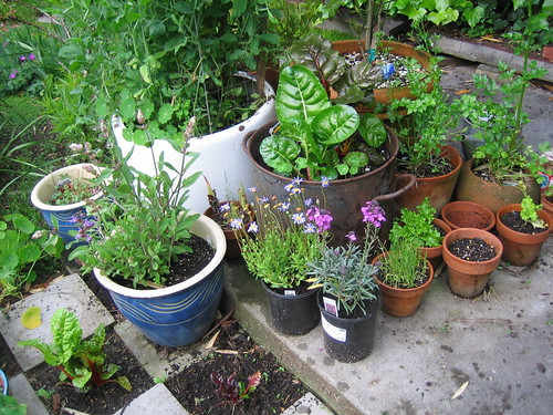 Pot Garden | by Earthworm