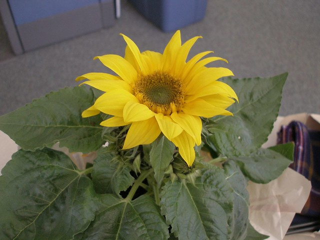 Sunflower Natural Food Store Laconia Nh