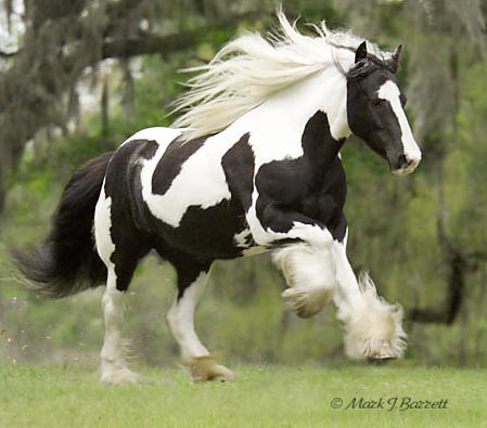 paint clydesdale - photo #15