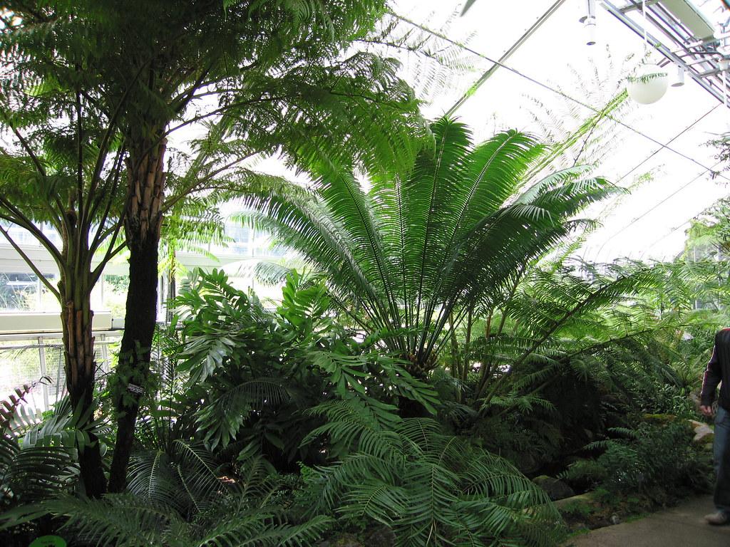 Botanic Garden   Matt Chan   Flickr