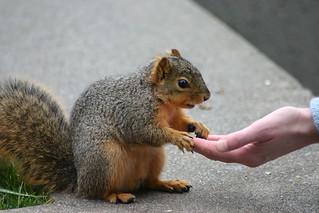 Animal Magnetism Kai Schreiber Flickr