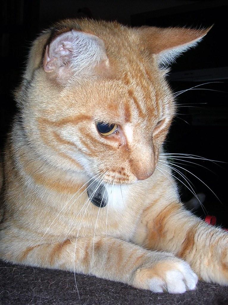 Atta Cat Cat Food