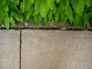Leaves, Brick, and Concrete | by pbyrne