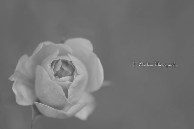 花便り(Tidings of flowers)~2017