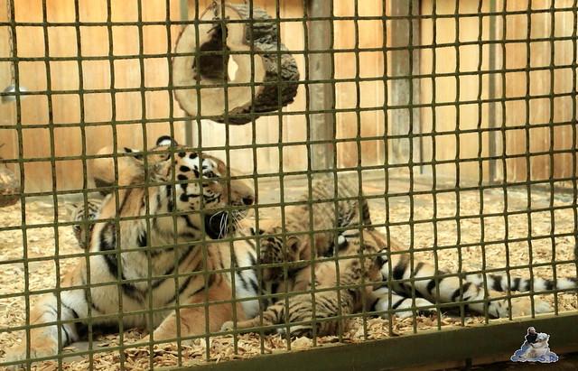 Tierpark Berlin 13.06.2015   136
