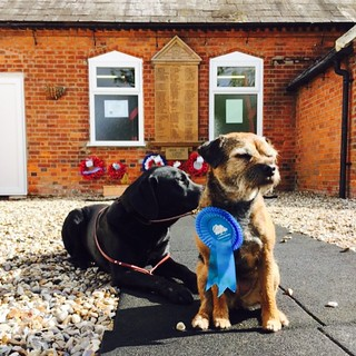 Dogs outside Polling Station, Harwich, Essex, UK | by Ashley Coates