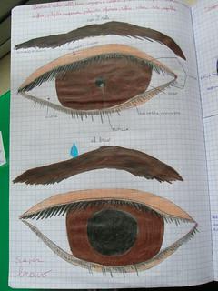 disegno occhio esterno