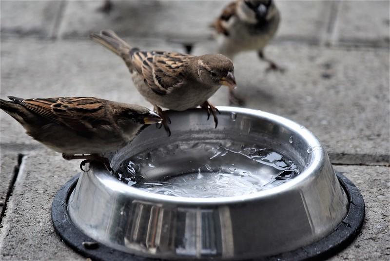Sparrows 31.12 (1)