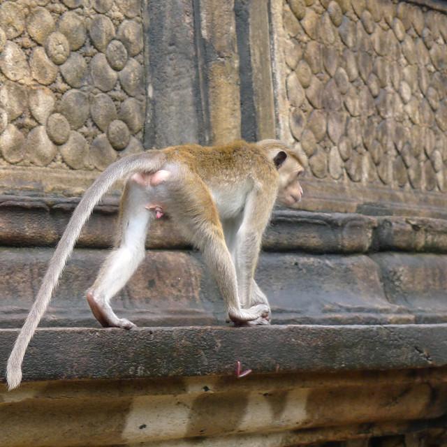 080-Polonnaruwa
