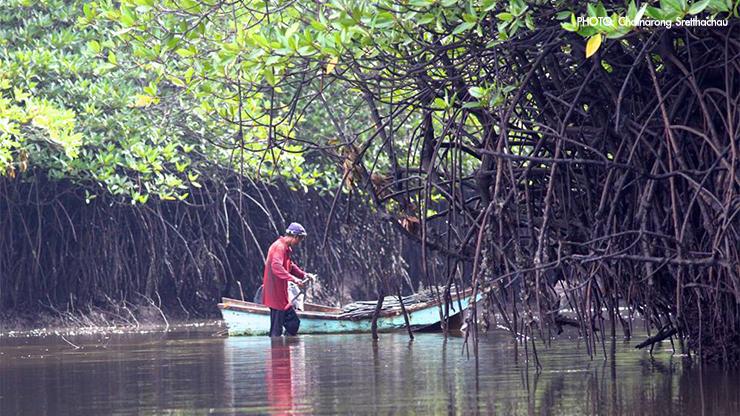 ชาวประมงพื้นบ้านวางลอบปูดำในป่าชายเลนใกล้ที่จะรับน้ำจากระบบหล่อเย็นของโรงไฟฟ้า