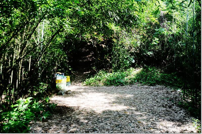 鷂婆山登山步道 1