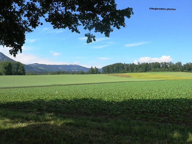 Crops in Feldbrunnen