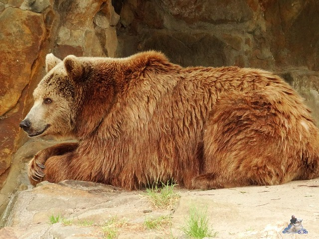 Zoo Berlin 26.06.2015  24