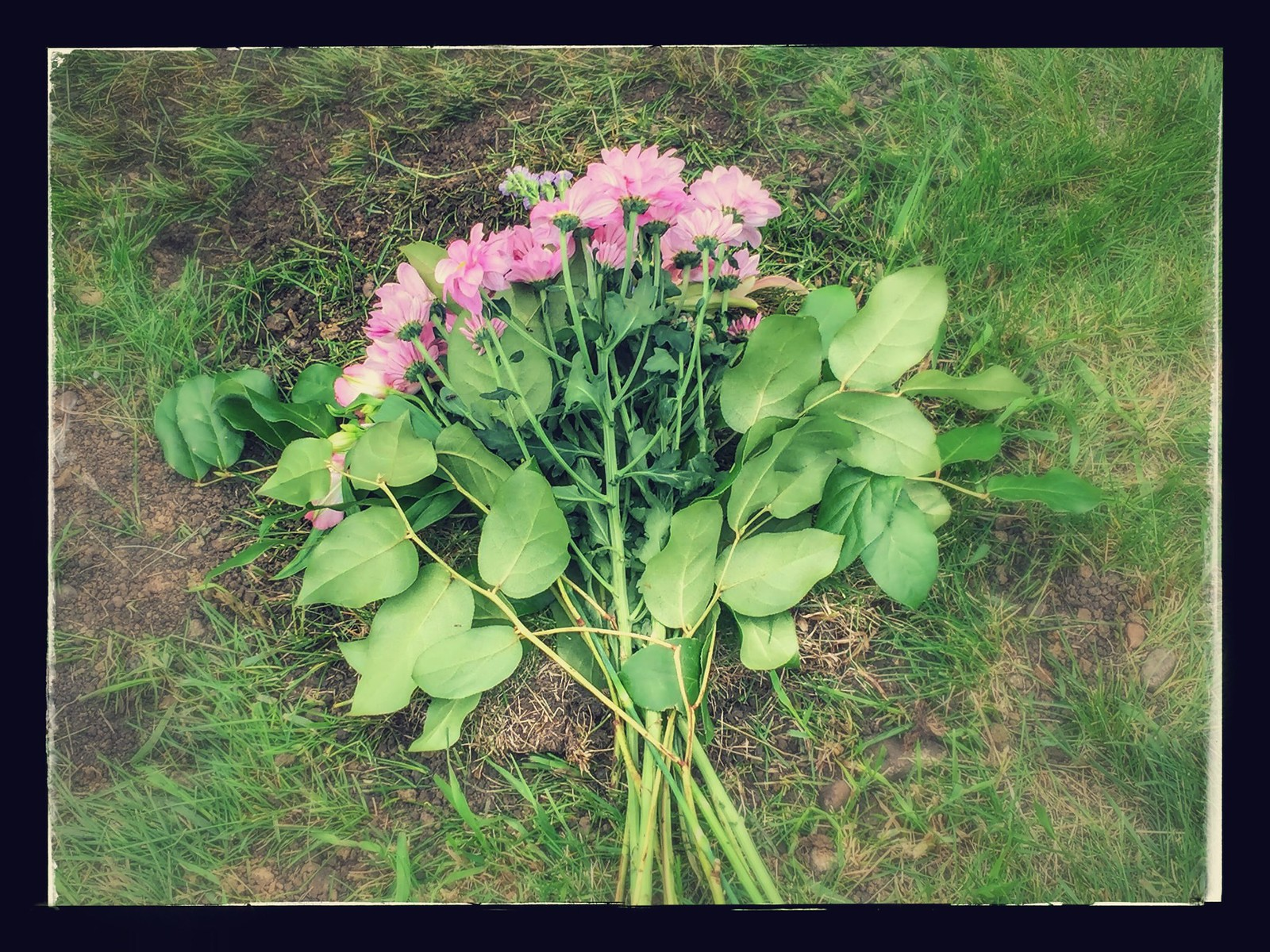 Flowers for Clary