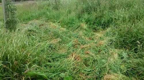 making hay June 15 2