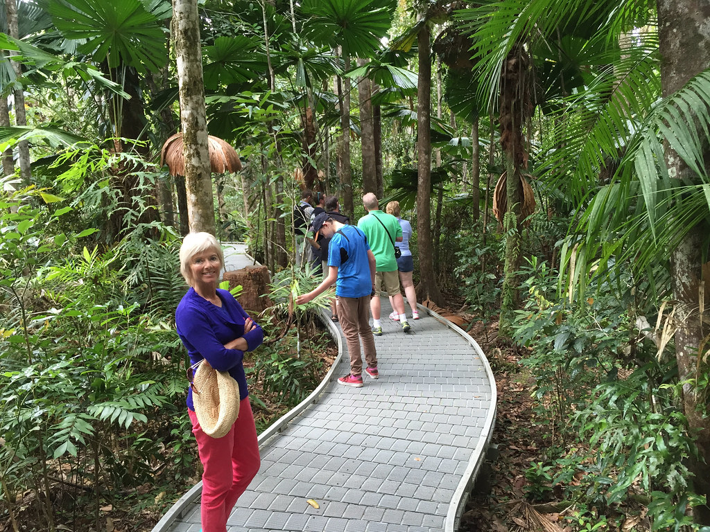 Daintree Forest holiday research