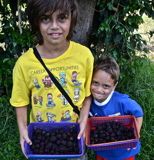 blackberry picking - La Ruta del Yalu