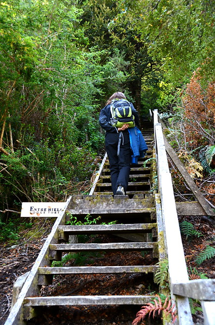 Steps leading to Lodge Entre Hielos, Caleta Tortel, Southern Chile