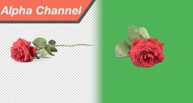 Collection Banner 520xx280